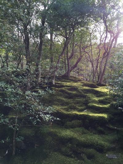 銀閣寺境内の苔むす自然