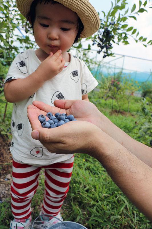 娘、ブルーベリーを食す