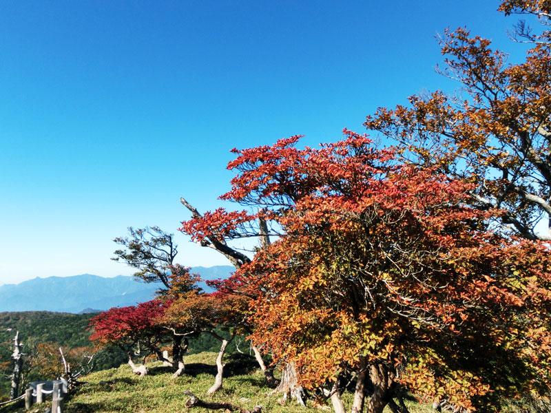 秋の大台ヶ原
