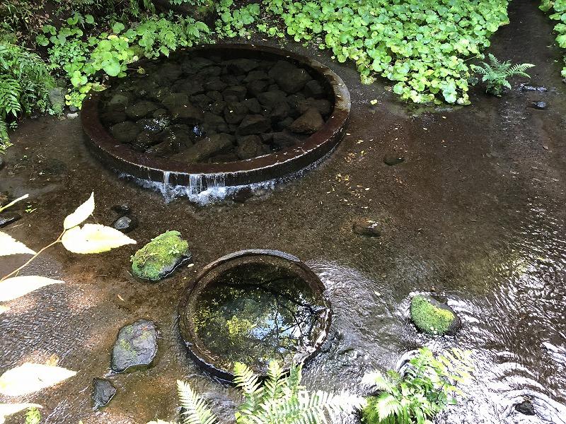 柿田川の湧水